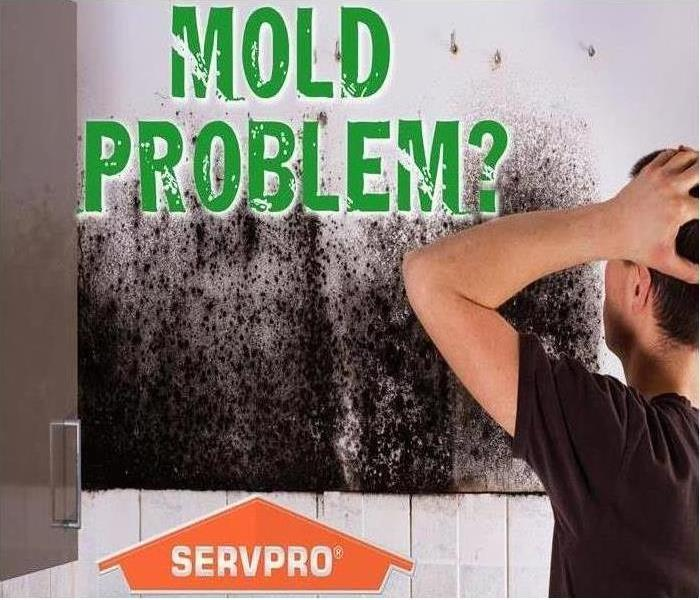 Remediate Mold in your Westminster Home