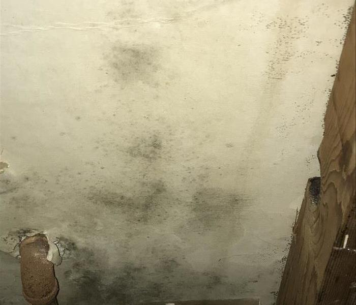 Mold can lurk anywhere, even in Newport Beach , CA