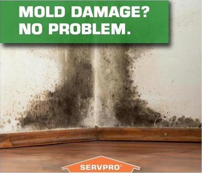 Wall with mold and SERVPRO logo