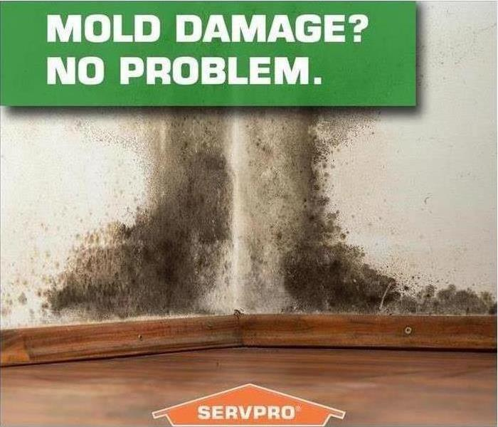 Mold on a wall with SERVPRO logo