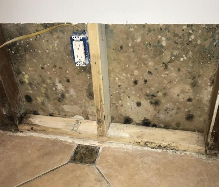 Mold contamination in the walls of a Westminster home.